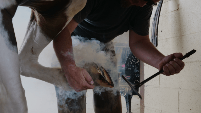 Hot! Shoeing – and ponderings of therapeutic shoeing.